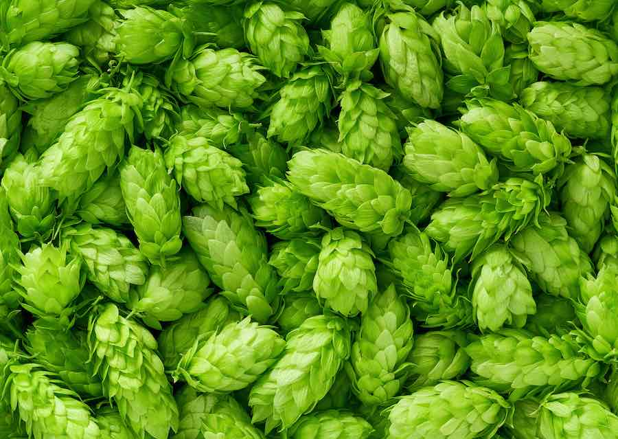 American Lager Recipes: Hops